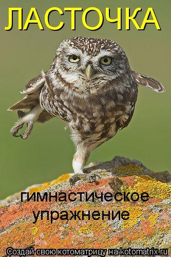 Котоматрица: ЛАСТОЧКА гимнастическое  упражнение