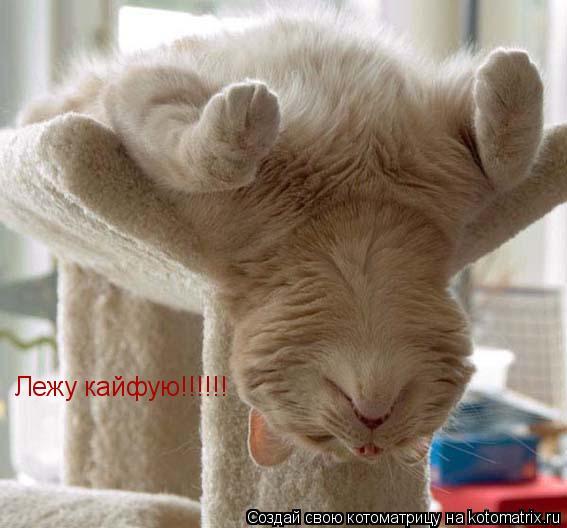 Котоматрица: Лежу кайфую!!!!!!