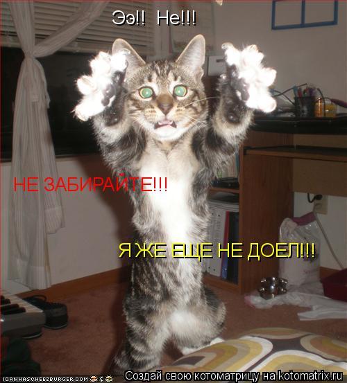 Котоматрица: Ээ!!  Не!!! НЕ ЗАБИРАЙТЕ!!! Я ЖЕ ЕЩЕ НЕ ДОЕЛ!!!