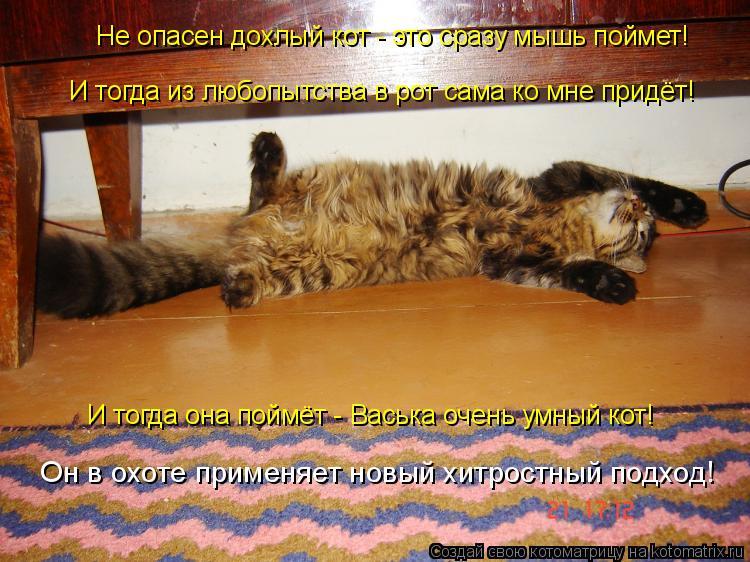 Котоматрица: Не опасен дохлый кот - это сразу мышь поймет! И тогда из любопытства в рот сама ко мне придёт! И тогда она поймёт - Васька очень умный кот! Он в