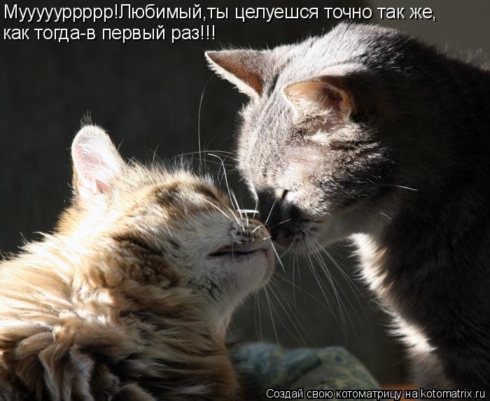 Котоматрица: Муууууррррр!Любимый,ты целуешся точно так же, как тогда-в первый раз!!!