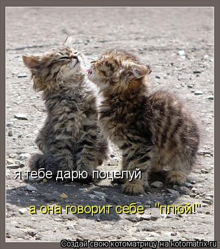 """Котоматрица: я тебе дарю поцелуй а она говорит себе : """"плюй!"""""""