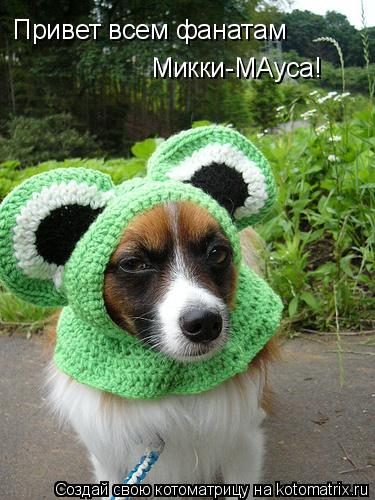 Котоматрица: Привет всем фанатам  Микки-МАуса!