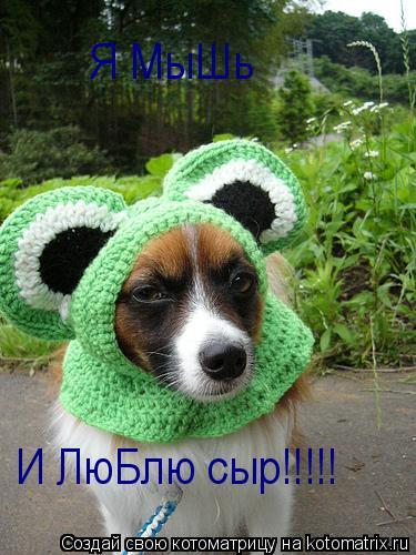 Котоматрица: Я МыШь И ЛюБлю сыр!!!!!