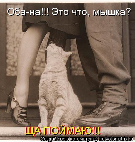 Котоматрица: Оба-на!!! Это что, мышка? ЩА ПОЙМАЮ!!! ЩА ПОЙМАЮ!!!