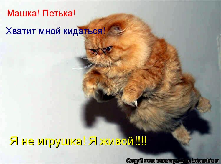 Котоматрица: Машка! Петька! Хватит мной кидаться! Я не игрушка! Я живой!!!!