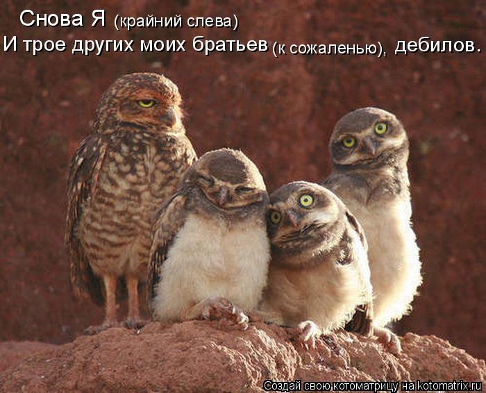 Котоматрица: Снова Я  (крайний слева) И трое других моих братьев (к сожаленью), дебилов.