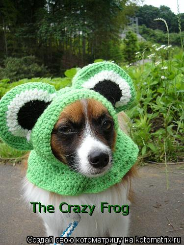 Котоматрица: The Crazy Frog