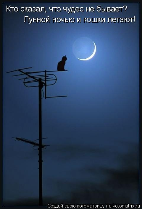 Котоматрица: Кто сказал, что чудес не бывает? Лунной ночью и кошки летают!