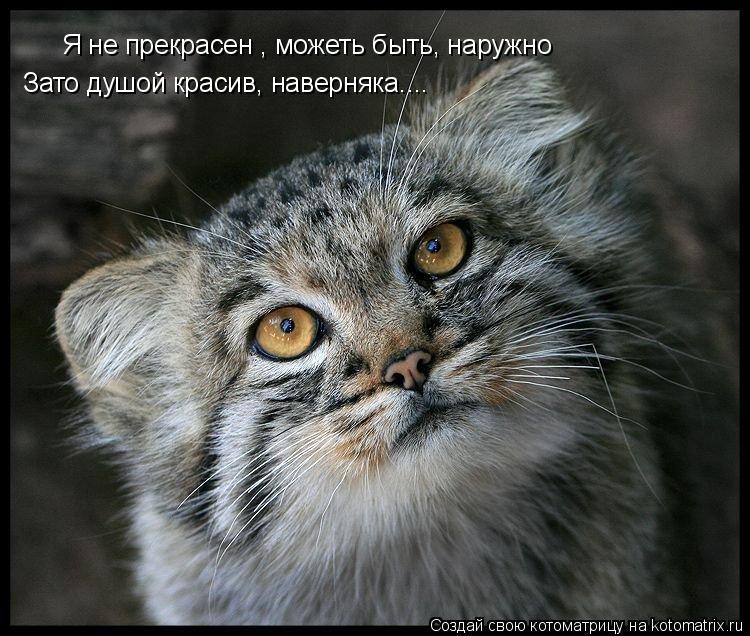 Котоматрица: Я не прекрасен , можеть быть, наружно Зато душой красив, наверняка....