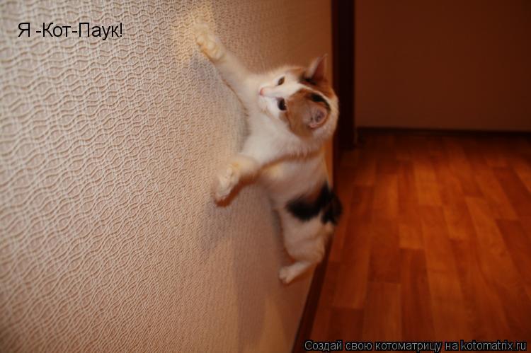 Котоматрица: Я -Кот-Паук!