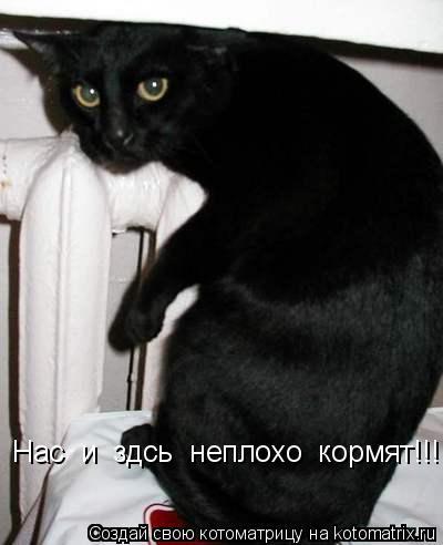 Котоматрица: Нас  и  здсь  неплохо  кормят!!!!!!!