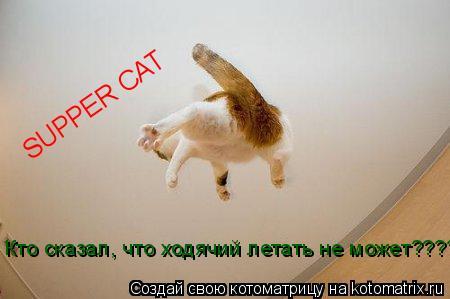 Котоматрица: SUPPER CAT Кто сказал, что ходячий летать не может??????