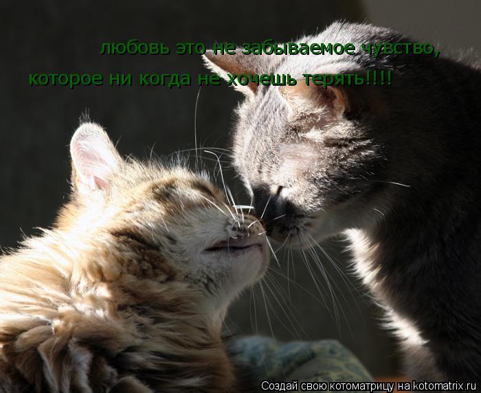 Котоматрица: любовь это не забываемое чувство, которое ни когда не хочешь терять!!!!