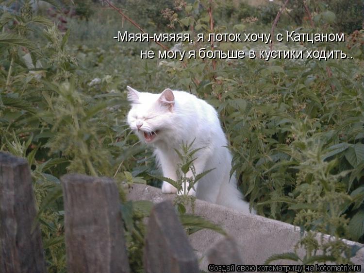 Котоматрица: -Мяяя-мяяяя, я лоток хочу, с Катцаном не могу я больше в кустики ходить..