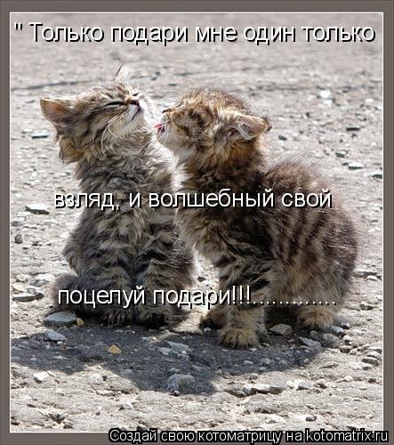 """Котоматрица: """" Только подари мне один только взляд, и волшебный свой  поцелуй подари!!!............."""