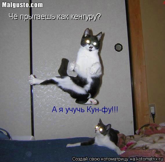Котоматрица: Чё прыгаешь как кенгуру? А я учучь Кун-фу!!!