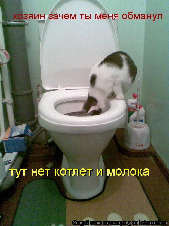 Котоматрица: хозяин зачем ты меня обманул тут нет котлет и молока