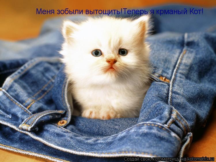 Котоматрица: Меня зобыли вытощить! Меня зобыли вытощить!Теперь я крманый Кот!