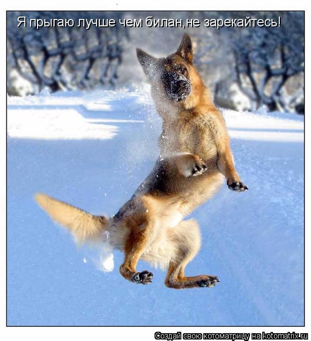 Котоматрица: Я прыгаю лучше чем билан,не зарекайтесь!