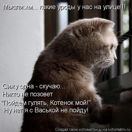 """Котоматрица: Сижу одна - скучаю... Никто не позовет Ну нет я с Васькой не пойду! """"Пойдем гулять, Котенок мой!"""" Мысли:хм... какие уроды у нас на улице!!!"""