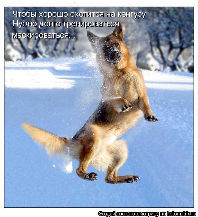 Котоматрица: Чтобы хорошо охотится на кенгуру Нужно долго тренироваться маскироваться...