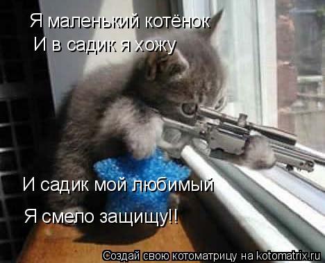 Котоматрица: Я маленький котёнок  И в садик я хожу  И садик мой любимый  Я смело защищу!!