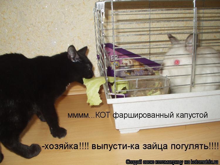 Котоматрица: мммм...КОТ фаршированный капустой -хозяйка!!!! выпусти-ка зайца погулять!!!!