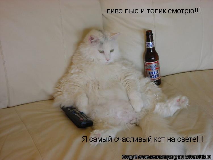 Котоматрица: пиво пью и телик смотрю!!! Я самый счасливый кот на свете!!!