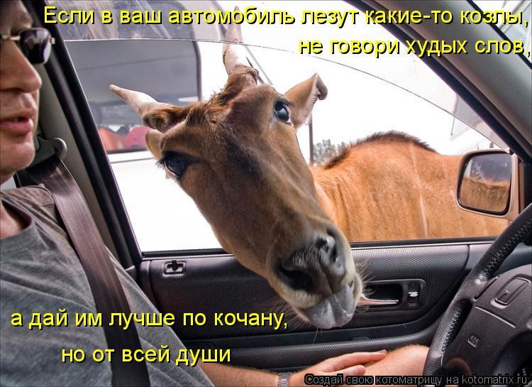 Котоматрица: Если в ваш автомобиль лезут какие-то козлы,  не говори худых слов, а дай им лучше по кочану, но от всей души