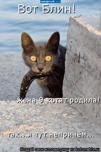 Котоматрица: Вот Блин! жена 9 котят родила! так...я тут непричём...