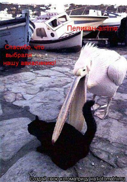 Когда нападают птицы / Юмор.