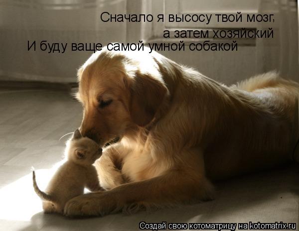 Котоматрица: Сначало я высосу твой мозг а затем хозяйский И буду ваще самой умной собакой ,