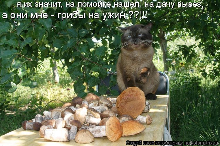 Котоматрица: я их значит, на помойке нашел, на дачу вывез,  а они мне - грибы на ужин ??!!!