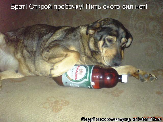 Котоматрица: Брат! Открой пробочку! Пить охото сил нет!