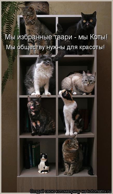 Котоматрица: Мы избранные твари - мы Коты! Мы обществу нужны для красоты!