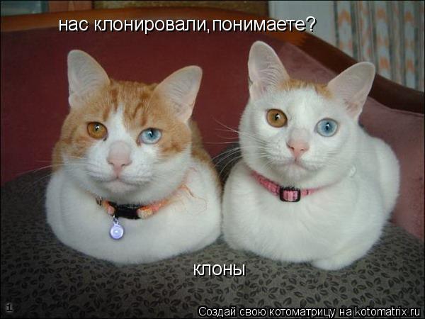 Котоматрица: клоны нас клонировали,понимаете?