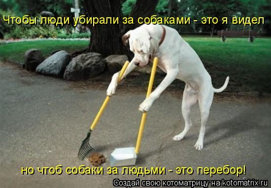 Котоматрица: Чтобы люди убирали за собаками - это я видел но чтоб собаки за людьми - это перебор!