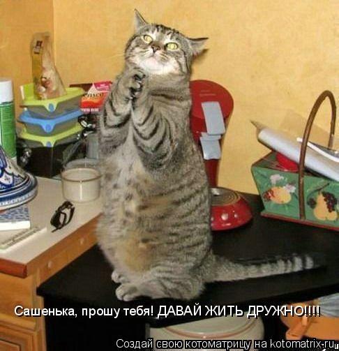 Котоматрица: Сашенька, прошу тебя! ДАВАЙ ЖИТЬ ДРУЖНО!!!! Сашенька, прошу тебя! ДАВАЙ ЖИТЬ ДРУЖНО!!!!