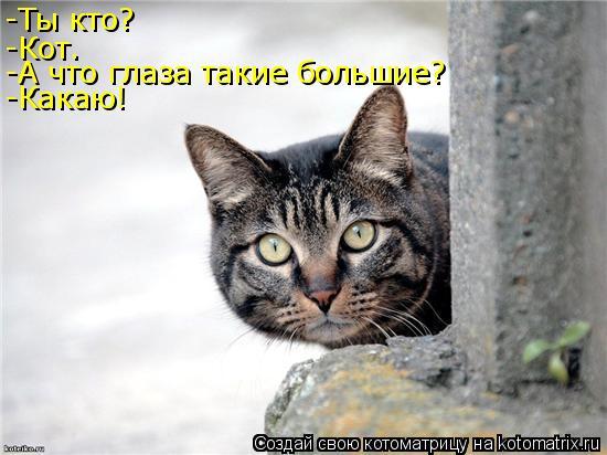 Котоматрица: -Ты кто? -Кот. -А что глаза такие большие? -Какаю!