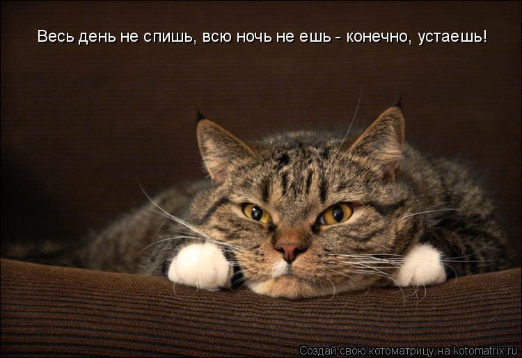 Котоматрица: Весь день не спишь, всю ночь не ешь - конечно, устаешь!