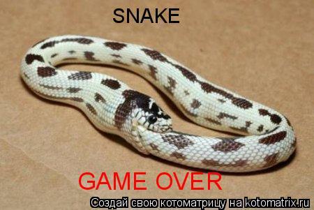 Котоматрица: SNAKE GAME OVER