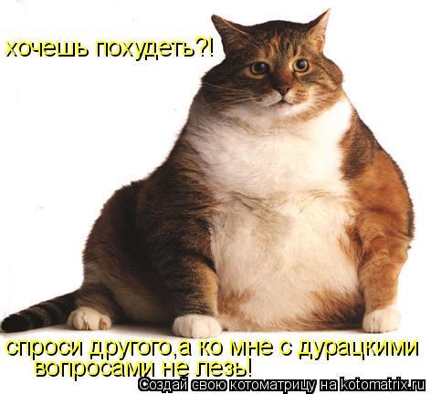 http://kotomatrix.ru/images/lolz/2009/05/22/8m.jpg
