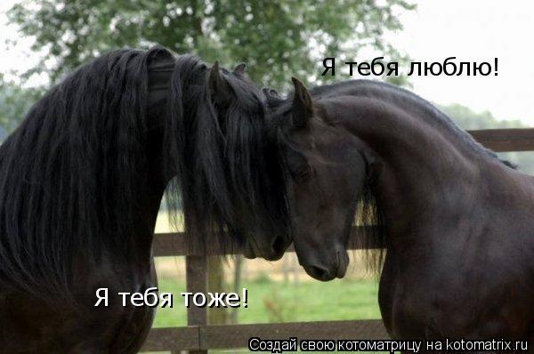 Котоматрица: Я тебя люблю! Я тебя тоже!