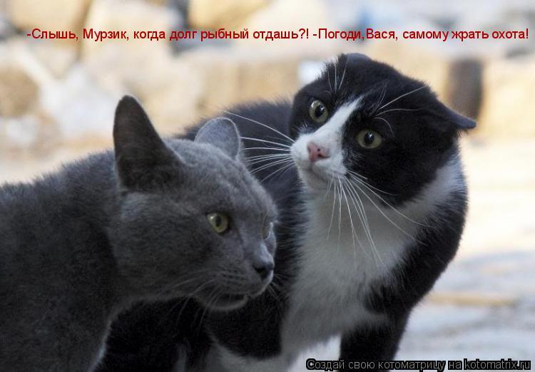 Котоматрица: -Слышь, Мурзик, когда долг рыбный отдашь?! -Погоди,Вася, самому жрать охота!