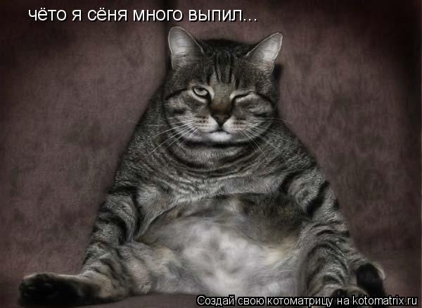 Котоматрица: чёто я сёня много выпил...
