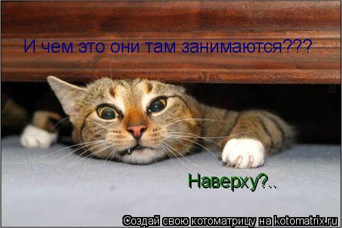 Котоматрица: И чем это они там занимаются??? Наверху?..