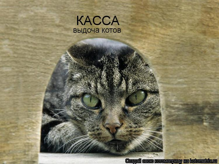 Котоматрица: КАССА выдоча котов