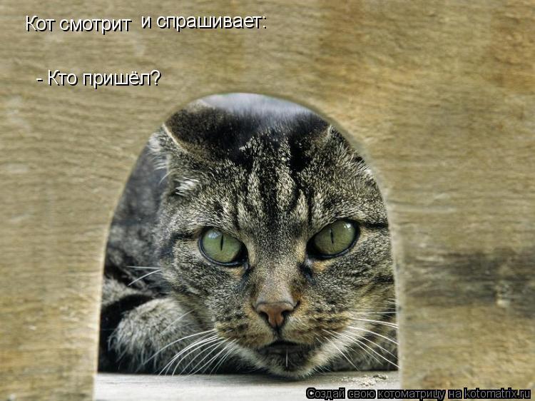 Котоматрица: Кот смотрит  и спрашивает:  - Кто пришёл?