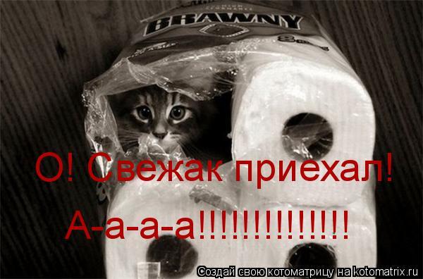 Котоматрица: О! Свежак приехал! А-а-а-а!!!!!!!!!!!!!!